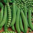 Peas: Green Arrow image