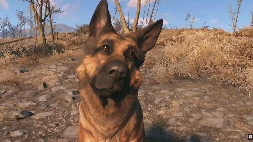 how to put dog armor on dog fallout 4