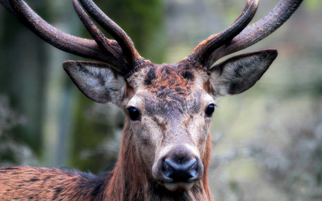 The Sacred Stag: A True Story of Mystical Connection