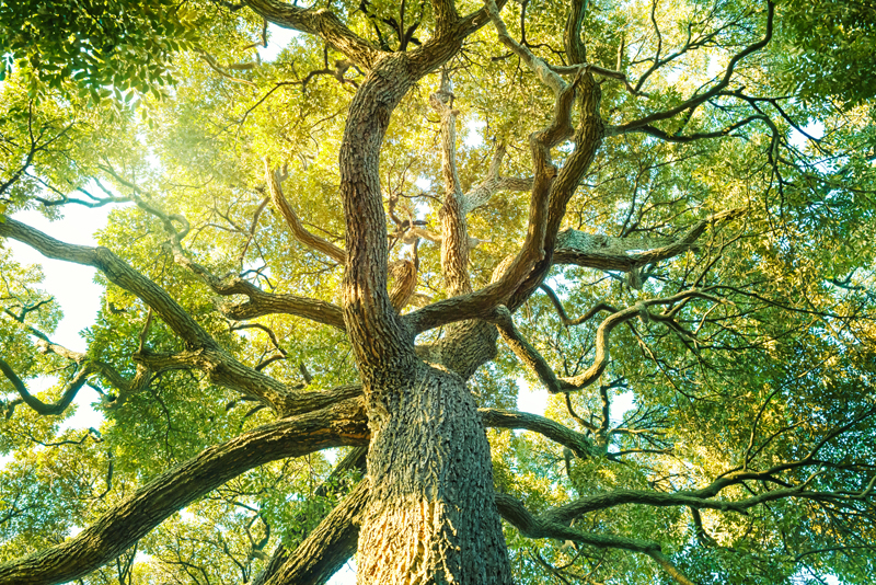 Witnessing Tree Spirits In Ordinary Reality