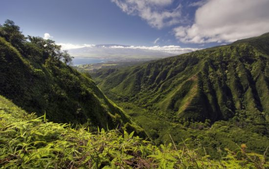 Maui island view of valley