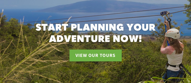 Start Planning Your Adventure Now with Skyline Eco-Adventures