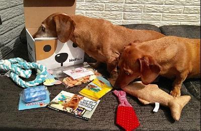 Somos una empresa que crea experiencias para fortalecer el vínculo entre humano-perro. Lo hacemos a través de cajitas sorpresa donde seleccionamos 5 o...