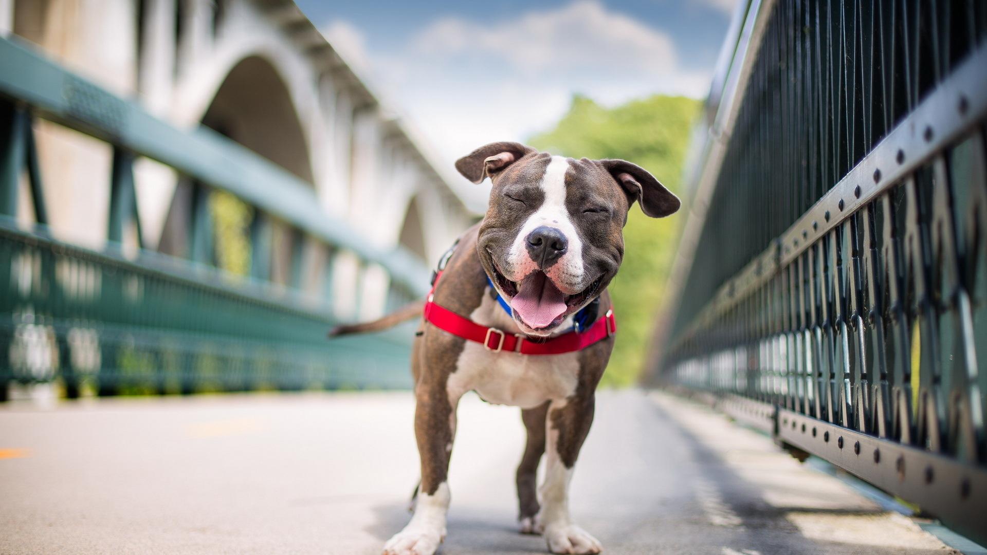 Tatis & Co es una empresa que se enfoca en el bienestar de nuestras mascotas. Da seguimiento puntual al desarrollo de nuestros animales, desde el...