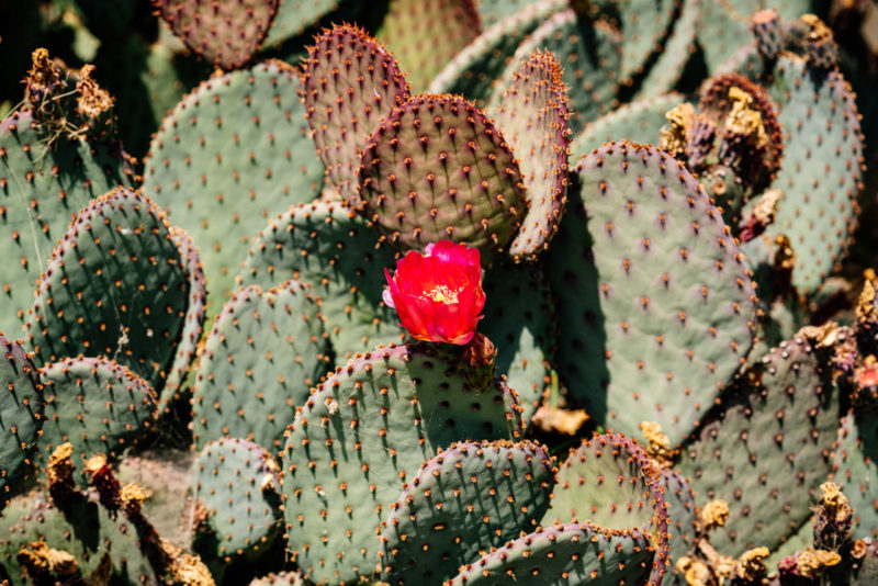 Wes lang cacti horizontal