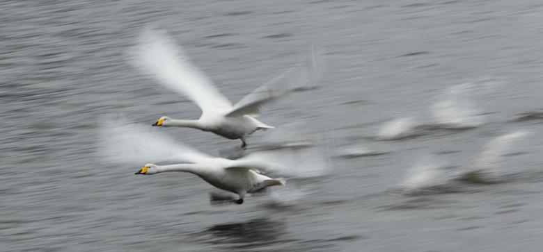 Stanford Engineers Find Secret To Steady Drone Cameras In Swan Necks
