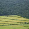 Amazon farming