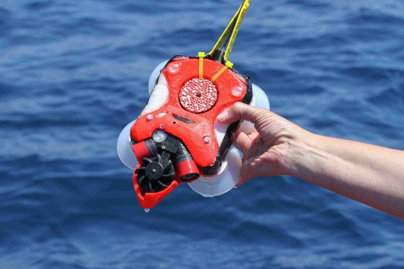 Whale sensory device