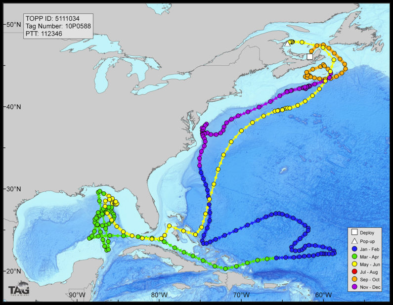 map of bluefin tuna spawning grounds
