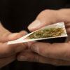 hands rolling a marijuana cigarette