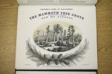 A book of engravings known as Vischer's Views Of California detailing The Mammoth Tree Grove, is part of the Sequoias collection.