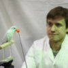 Graduate student Marc E. Deetjen trains a parrotlet to fly between perches.