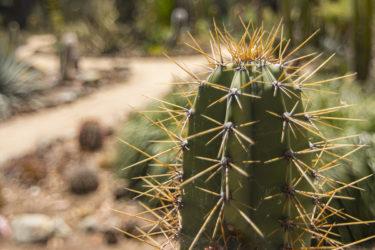 Cactus Garden