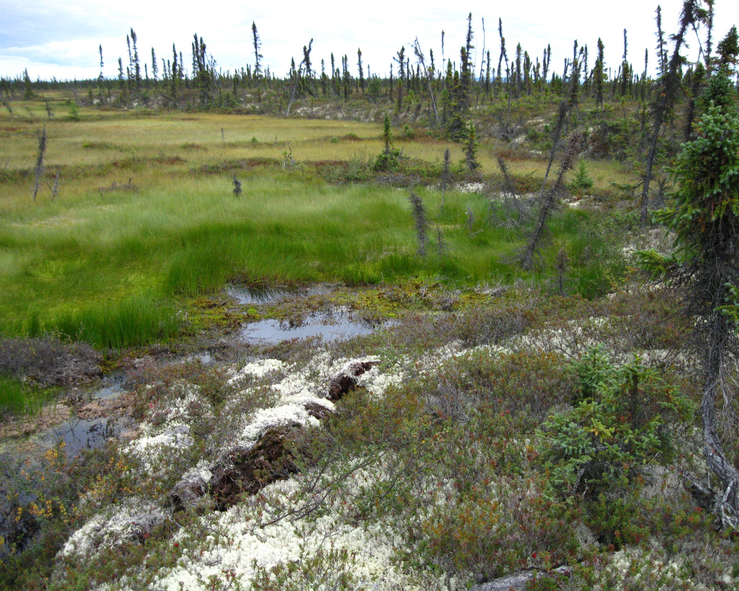 Slag Soil Melted : Soil holds potential to slow global warming stanford news