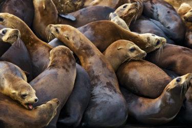 Sea lions in Moss Landing, California