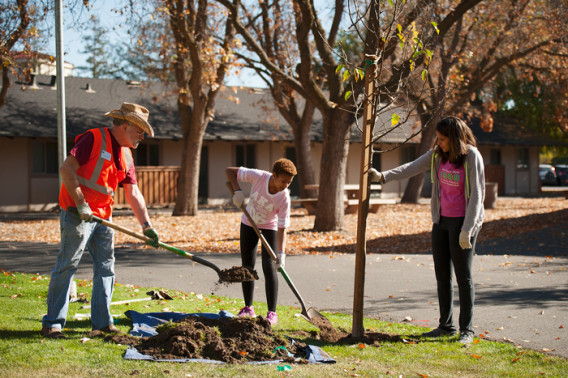 Volunteer Dave Cortesi from Canopy.org instructs AKA Sorority members Joy Scott and chapter president Megan McKoy in the planting of a tree in Escondido Village at Stanford.
