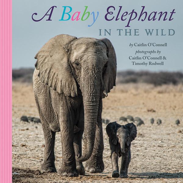 babyelephant_dish600px