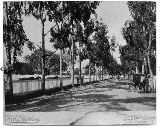 Governor's Avenue