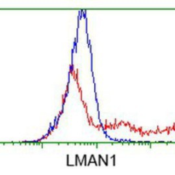 Flow-Cytometry-LMAN1-Antibody-1E3-NBP2-03382-HEK293T-cells-transfected-with-either-overexpression-plasmid-Red-or-empty-vector-control-plasmid-Blue-were-immunostained-by-anti-LMAN1-antibody-