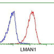 Flow-Cytometry-LMAN1-Antibody-1E3-NBP2-03382-Analysis-of-Jurkat-cells-using-anti-LMAN1-antibody-Red-compared-to-a-nonspecific-negative-control-antibody-Blue-