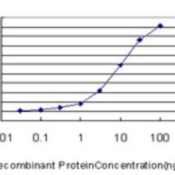 ELISA-LEF1-Antibody-2C9-H00051176-M04-Detection-limit-for-recombinant-GST-tagged-LEF1-is-approximately-0-3ng-ml-as-a-capture-antibody-