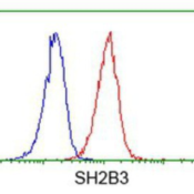 Flow-Cytometry-LNK-Antibody-2C9-NBP2-00774-Analysis-of-Jurkat-cells-using-anti-LNK-antibody-Red-compared-to-a-nonspecific-negative-control-antibody-Blue-