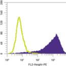 SSEA-1-Antibody-PE-Mouse-anti-Mouse-Human-Stemgent-09-0001