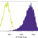 TRA-1-60-Antibody-PE-Mouse-anti-Human-Stemgent-09-0009