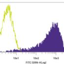 TRA-1-60-Antibody-Purified-Mouse-anti-Human-Stemgent-09-0010