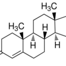 Testosterone-Biorbyt-orb60770-100