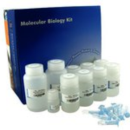 EZ-500-Spin-Column-Plasmid-DNA-Maxipreps-Kit-Bio-Basic-BS4654