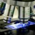 Fixed-Adipose-Tissue-Slide-Zen-Bio-Inc-SLD-2