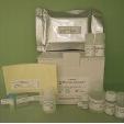 GLP-1-ELISA-Human-Mouse-Rat-KAMIYA-BIOMEDICAL-COMPANY-KT-384