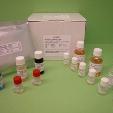COMP-ELISA-Human-KAMIYA-BIOMEDICAL-COMPANY-BP-003