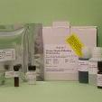 Vitamin-D-Binding-Protein-ELISA-Human-KAMIYA-BIOMEDICAL-COMPANY-KT-515