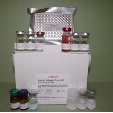 Collagen-Type-II-Alpha-1-ELISA-Kit-COL2a1-Human-KAMIYA-BIOMEDICAL-COMPANY-KT-50267
