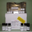 Regenerating-Islet-Derived-Protein-3-Alpha-REG3a-ELISA-Kit-Human-KAMIYA-BIOMEDICAL-COMPANY-KT-32339