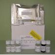 Somatostatin-SST-ELISA-Kit-Human-KAMIYA-BIOMEDICAL-COMPANY-KT-28589