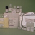 Glucagon-ELISA-Human-Mouse-Rat-KAMIYA-BIOMEDICAL-COMPANY-KT-381