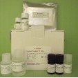 Peptide-YY-PYY-ELISA-Human-KAMIYA-BIOMEDICAL-COMPANY-KT-378
