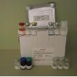 Leptin-ELISA-Kit-Human-KAMIYA-BIOMEDICAL-COMPANY-KT-53225