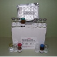 Thrombin-Activatable-Fibrinolysis-Inhibitor-ELISA-Kit-TAFI-Human-KAMIYA-BIOMEDICAL-COMPANY-KT-50885
