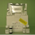 Fetoprotein-Alpha-aFP-ELISA-Kit-Mouse-KAMIYA-BIOMEDICAL-COMPANY-KT-14753