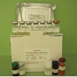 Serum-Amyloid-A-ELISA-Kit-Rat-KAMIYA-BIOMEDICAL-COMPANY-KT-51579