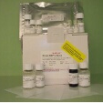 Matrix-Metalloproteinase-12-MMP12-ELISA-Kit-Mouse-KAMIYA-BIOMEDICAL-COMPANY-KT-21602