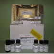 Matrix-Metalloproteinase-7-MMP7-ELISA-Kit-Rat-KAMIYA-BIOMEDICAL-COMPANY-KT-21779