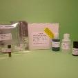 Plasminogen-ELISA-Mouse-KAMIYA-BIOMEDICAL-COMPANY-KT-409