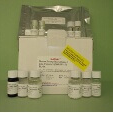Deoxyribonuclease-I-Like-Protein-3-DNASE1L3-ELISA-Kit-Mouse-KAMIYA-BIOMEDICAL-COMPANY-KT-32312