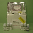 Granzyme-M-GZM-M-ELISA-Kit-Mouse-KAMIYA-BIOMEDICAL-COMPANY-KT-31977