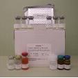 Interferon-Gamma-ELISA-Kit-IFN-Gamma-Rabbit-KAMIYA-BIOMEDICAL-COMPANY-KT-56493